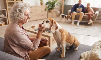 Jakie zwierzątko dla starszej osoby?